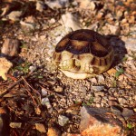 Small tortoise in the park